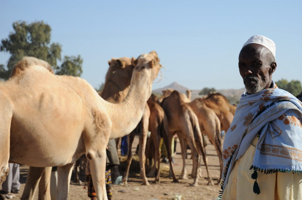 A man and his camels in Somalia
